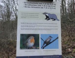 Fauna di Drielandenpunt