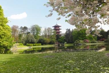 Bunga sakura dan menara Jepang